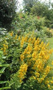 English garden in the summer