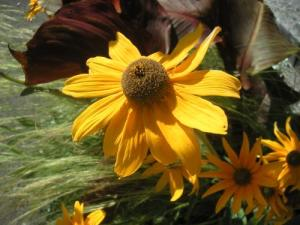 Flowers at Brompton Cemetry