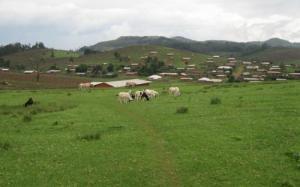 Mbosha's rolling hills